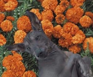 dog, méxico, and dia de muertos image