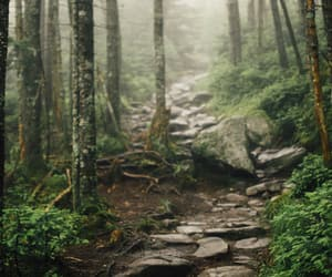 forest, nature, and beaver brook trail image