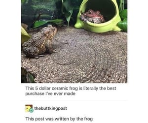 frog, funny, and hilarious image