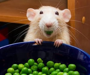 blonde, tiny, and peas image