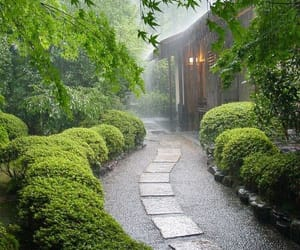 rain and green image