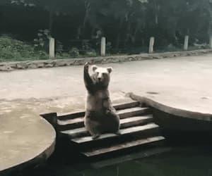 animal, bears, and gif image