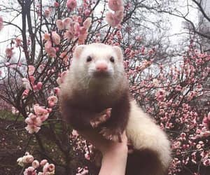animal, pink, and cute image