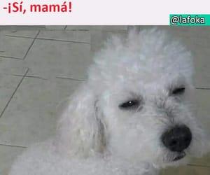 mama, memes, and risas image