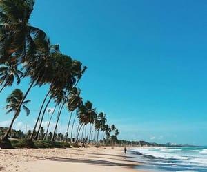 beach, palm, and beach vibes image
