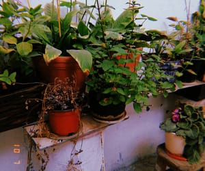 flowerpot, garden, and photogaphy image