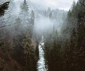 adventure, wild, and nature image