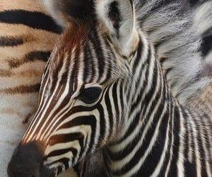 Animales, naturaleza, and cebra image