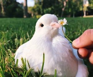 bird, pigeon, and animals image