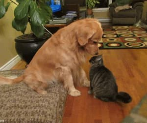 Gatos, Animales, and gif image