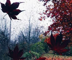 autumn, autunno, and leaves image