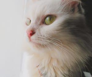 aesthetic, animal, and cat eyes image