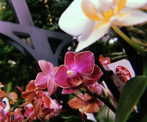 flowers, orchid, and photography image