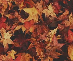 autumn, gif, and fall aesthetic image