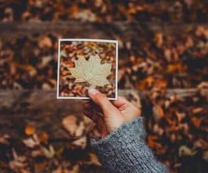 aesthetic, style, and fall image
