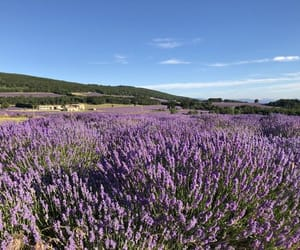 field, france, and provence image