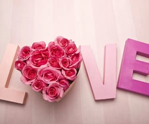 love, pink, and rose image
