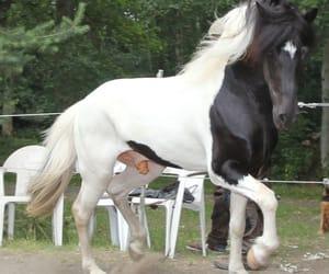 black, white, and horse image