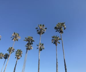 america, goals, and palms image
