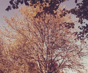 arbre, automne, and nature image
