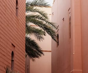 marrakech, nature, and morrocco image