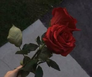 alternative and roses image