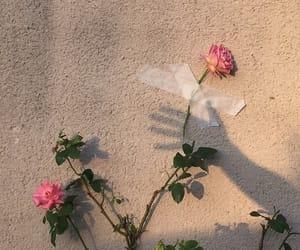 beautiful, photo, and flowers image