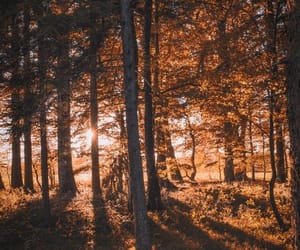 autumn and tumblr image