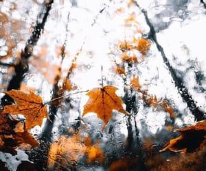 autumn and globe image