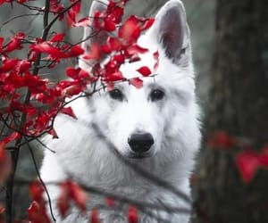 white, wolf, and animals image