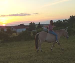 evening, friend, and horse image