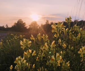 August, flowers, and pretty image