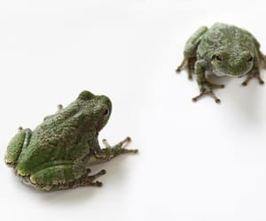 aesthetic, frogs, and animals image