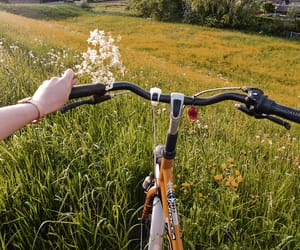bicycle, cycling, and flowerfield image