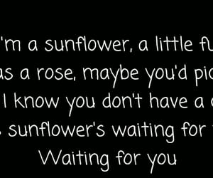 girl, songs, and sunflowers image