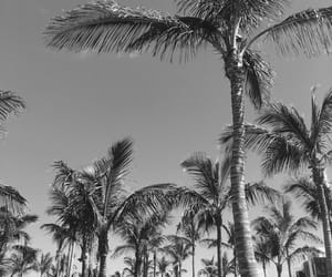 background, lanzarote, and palm trees image