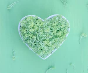 green, heart, and minimal image