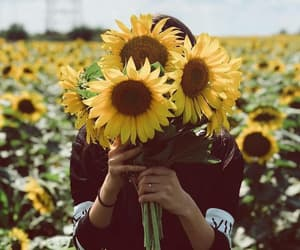 sunflower and flowers image