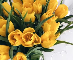 color, flowers, and tulips image