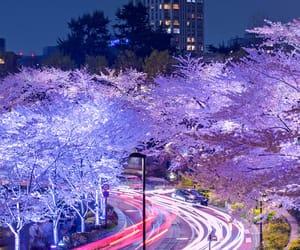 cherry blossom, cherry blossoms, and city image