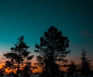 cielo, forest, and sunset image