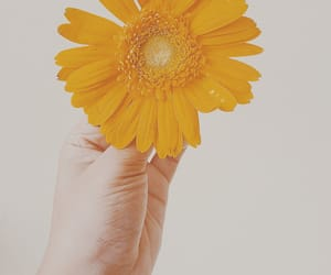 flower, hand, and nature image