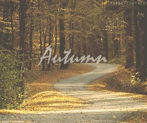 autumn, falling, and glow image