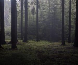 fog, beautiful, and dark image