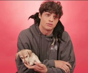 boy, puppies, and noah centineo image