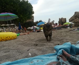 andalucia, cat, and nerja image