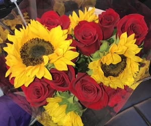 flowers, sunflower, and roses image