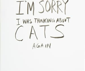 cat, quotes, and thinking image