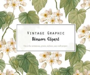 botanical, etsy, and digital flower image