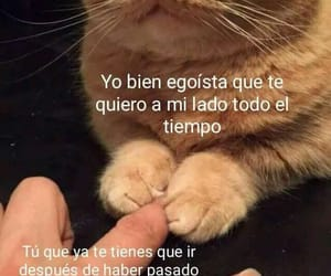 frases, 😍, and 😢 image